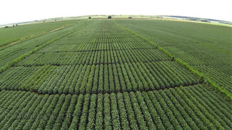 spring-crops49