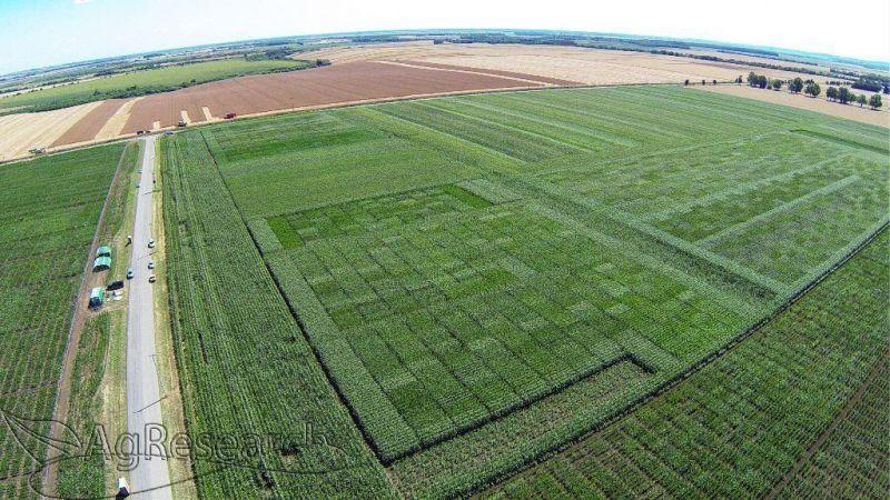 spring-crops50