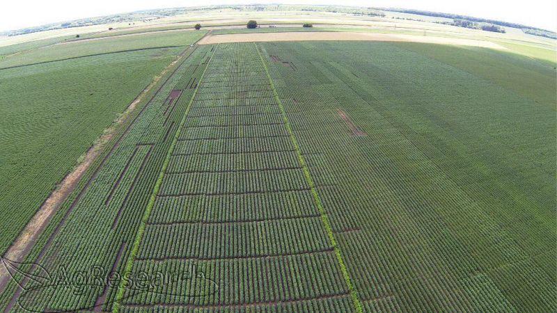 spring-crops52