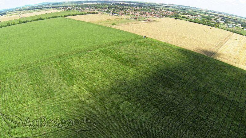 spring-crops53