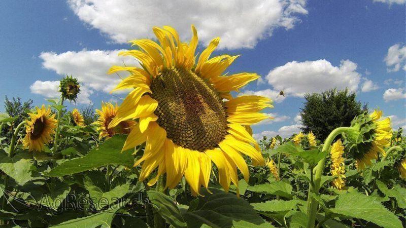 spring-crops55