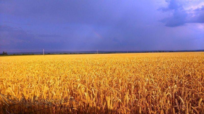 winter-crops1
