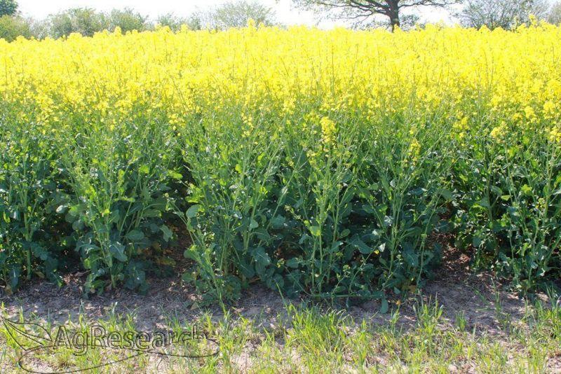 winter-crops3