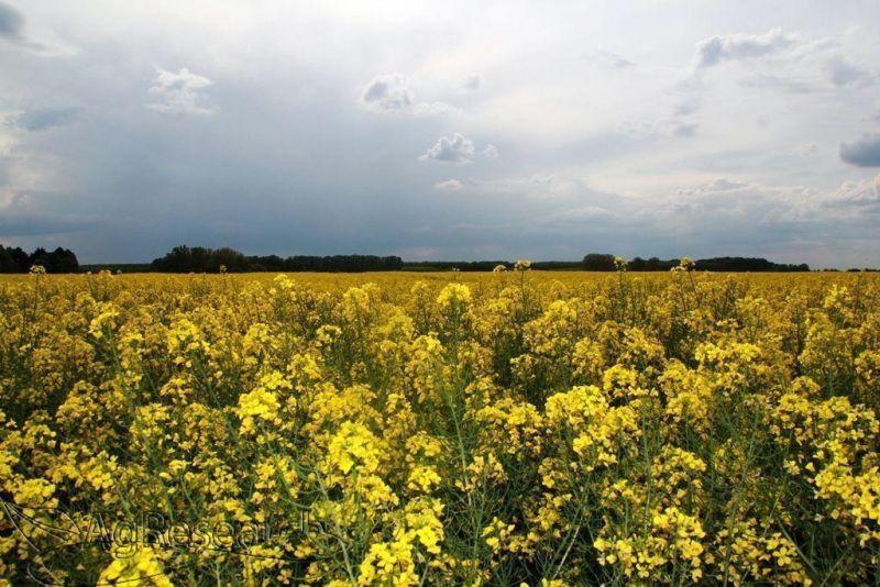 winter-crops6