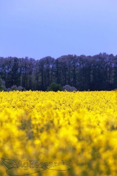 winter-crops8