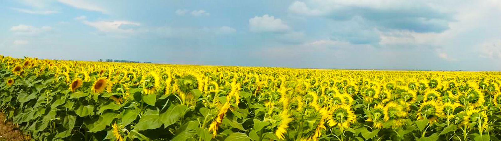 Services in Sunflower, AgResearch